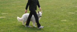 paseo perro sin correa